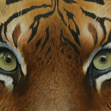 (CreativeWork) 'Tiger, Tiger' by Brett Jarrett. Oil Paint. Shop online at Bluethumb.