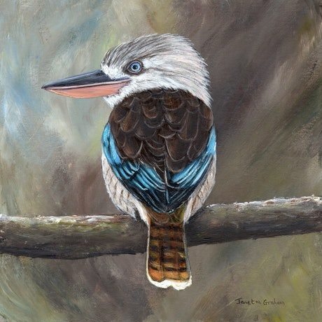 (CreativeWork) Blue - Winged Kookaburra by Janet Graham. Acrylic Paint. Shop online at Bluethumb.