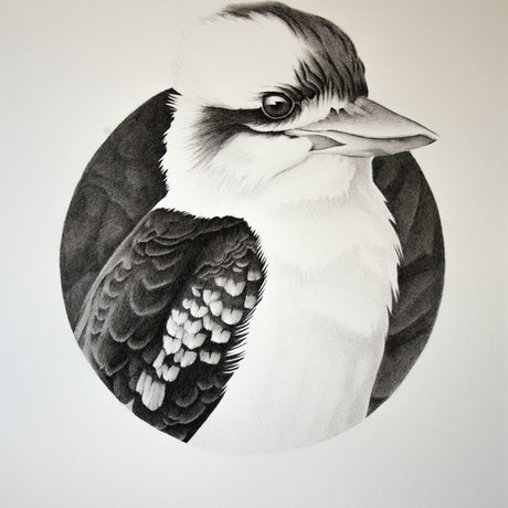 (CreativeWork) Aussie Kookaburra by Dean Spinks. Drawings. Shop online at Bluethumb.