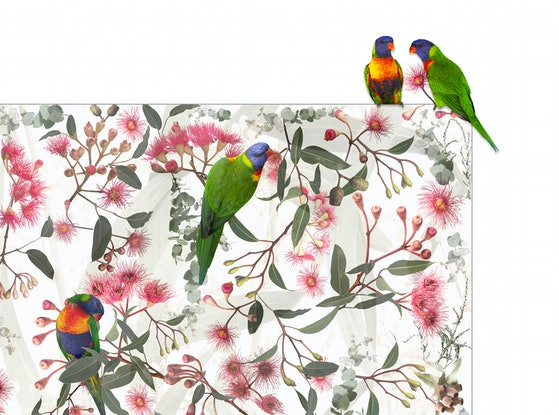 (CreativeWork) Beaks and Blooms Ed. 4 of 20 by Pamela Pauline. Photograph. Shop online at Bluethumb.
