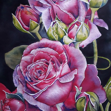 (CreativeWork) Pink Roses by Rachael Charalambous. Watercolour Paint. Shop online at Bluethumb.
