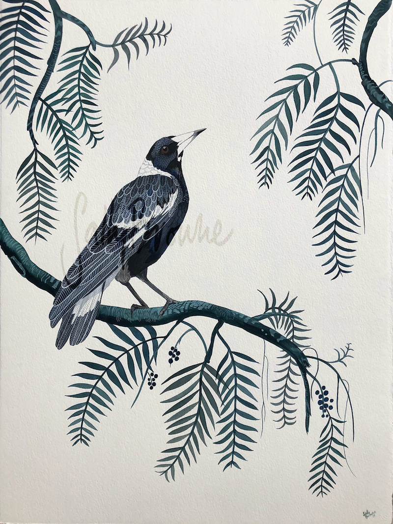 (CreativeWork) Peppercorn Magpie 2019 by Sally Browne. watercolour. Shop online at Bluethumb.