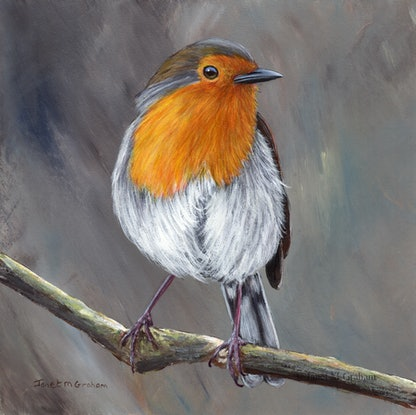 (CreativeWork) Robin   by Janet Graham. #<Filter:0x00007f1f7ced0150>. Shop online at Bluethumb.