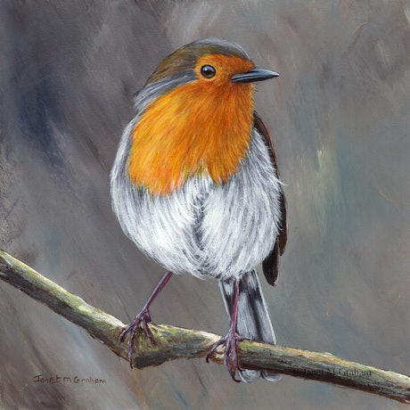 (CreativeWork) Robin   by Janet Graham. Acrylic Paint. Shop online at Bluethumb.