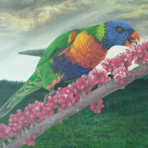(CreativeWork) Limited edition print 2 of 30 giclee on stretched canvas lorikeet Ed. 2 of 30 by a naylan. print. Shop online at Bluethumb.