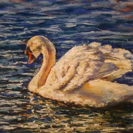 (CreativeWork) Swan by William Choi. Drawings. Shop online at Bluethumb.