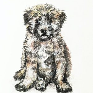 (CreativeWork) Wheaten Pup I Ed. 1 of 50 by Chelle Destefano. print. Shop online at Bluethumb.