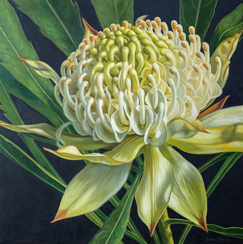 (CreativeWork) White Waratah on Indigo, 2 by Fiona Craig. oil-painting. Shop online at Bluethumb.