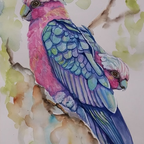 (CreativeWork) Galahs by Jo Taylor. Mixed Media. Shop online at Bluethumb.