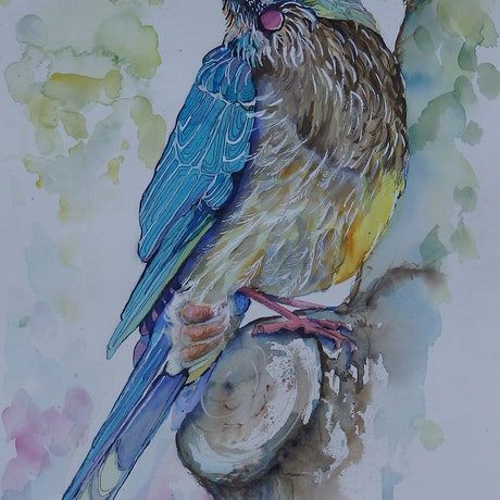 (CreativeWork) Wattlebird by Jo Taylor. Mixed Media. Shop online at Bluethumb.