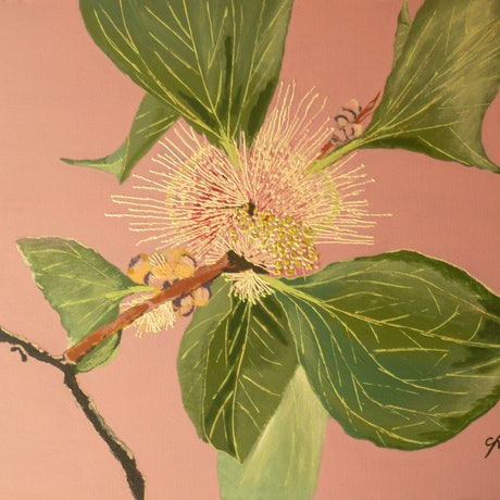 (CreativeWork) Sea Urchin Hakea by Claudette Pope    -    Wild Beauty. Acrylic Paint. Shop online at Bluethumb.