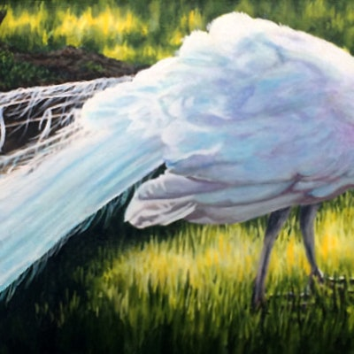 (CreativeWork) Une Vision En Blanc - White Peacock by Jillian Crider. acrylic-painting. Shop online at Bluethumb.