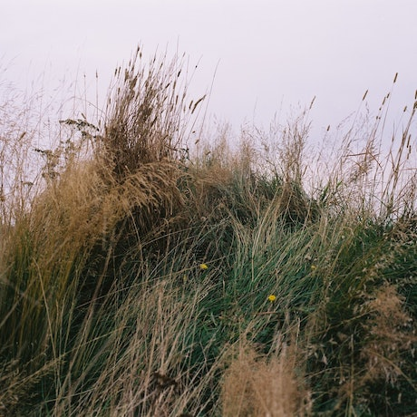 (CreativeWork) Icelandic grass by Marlaina Read. Photograph. Shop online at Bluethumb.