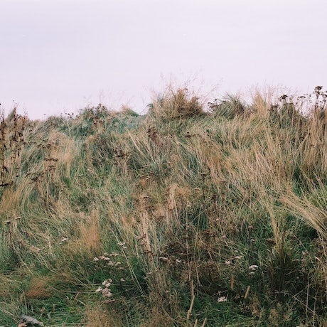 (CreativeWork) Icelandic grass #2 by Marlaina Read. Photograph. Shop online at Bluethumb.