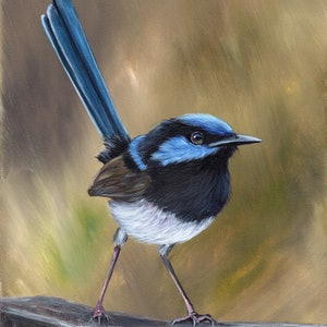 (CreativeWork) Superb Fairy Wren by Janet Graham. acrylic-painting. Shop online at Bluethumb.