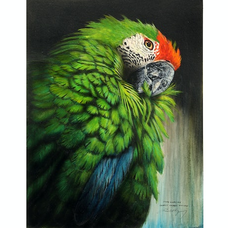 (CreativeWork) South American Great Green Macaw by Paul Margocsy. Watercolour Paint. Shop online at Bluethumb.