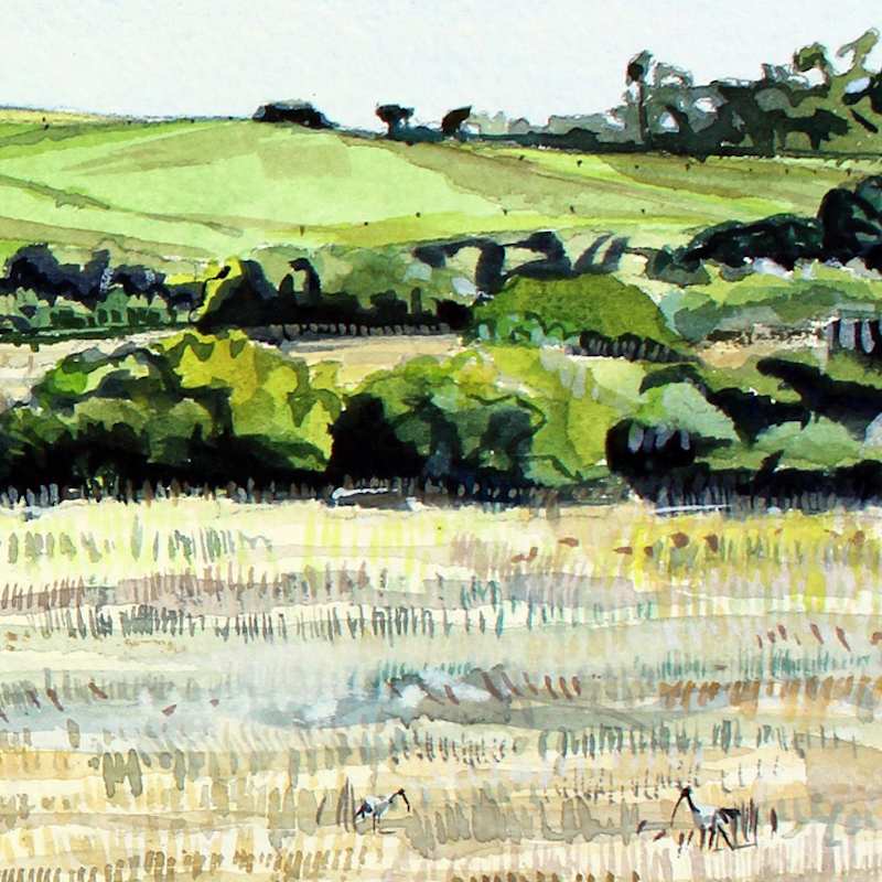 (CreativeWork) Ibis in the grass by Tim O'Shea. watercolour. Shop online at Bluethumb.