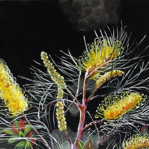 (CreativeWork) Grevillea in the Afternoon Light by Julie Hollis. arcylic-painting. Shop online at Bluethumb.
