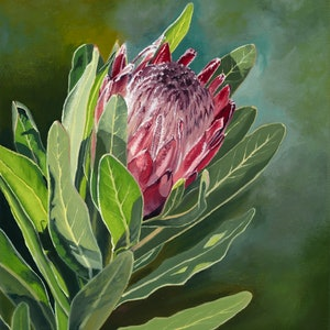 (CreativeWork) Pink Ice Protea 1 by Julie Cane. oil-painting. Shop online at Bluethumb.