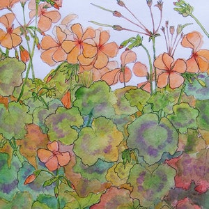 "(CreativeWork) ""APRICOT GERANIUMS"" by Daniela Selir. watercolour. Shop online at Bluethumb."