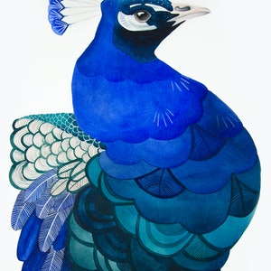 (CreativeWork) Peacock Watercolour A2 by Clare McCartney. watercolour. Shop online at Bluethumb.
