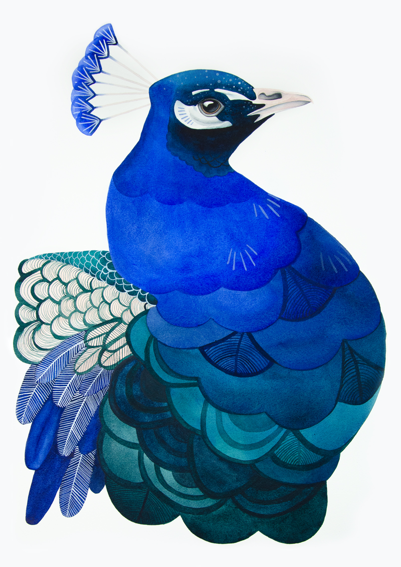 (CreativeWork) Peacock Watercolour A2 by Clare McCartney. Watercolour Paint. Shop online at Bluethumb.