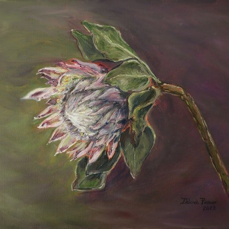 (CreativeWork) Protea (canvas print, stretched) by Deborah Pienaar. Print. Shop online at Bluethumb.
