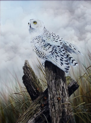 (CreativeWork) American Snowy Owl by Paul Margocsy. Watercolour Paint. Shop online at Bluethumb.
