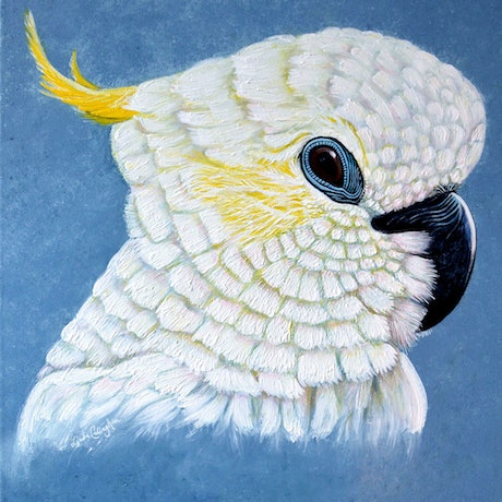 (CreativeWork) COCKATOO LOOKOUT  by Linda Callaghan. Acrylic Paint. Shop online at Bluethumb.