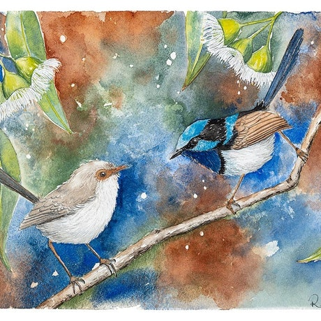 (CreativeWork) Superb Fairy-wrens and Gum Blossom by Rebecca Phillips. Watercolour. Shop online at Bluethumb.
