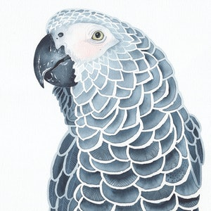 (CreativeWork) The Grey Parrot – Watercolour A3 by Clare McCartney. watercolour. Shop online at Bluethumb.