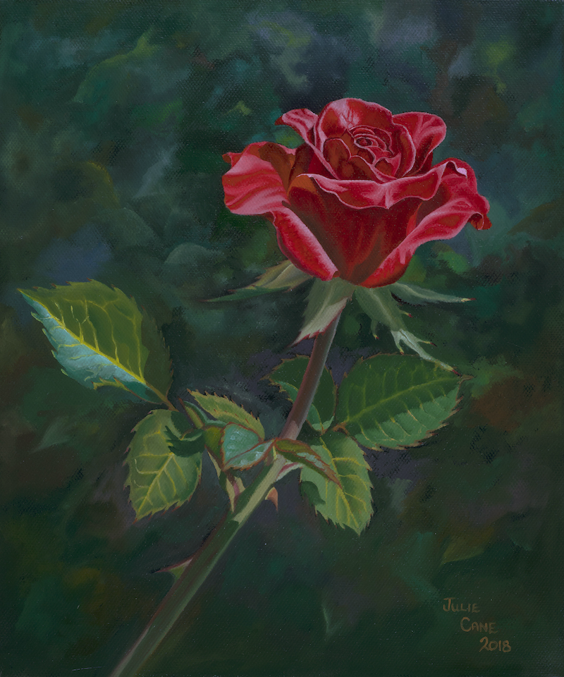 (CreativeWork) A Single Red Rose by Julie Cane. oil-painting. Shop online at Bluethumb.