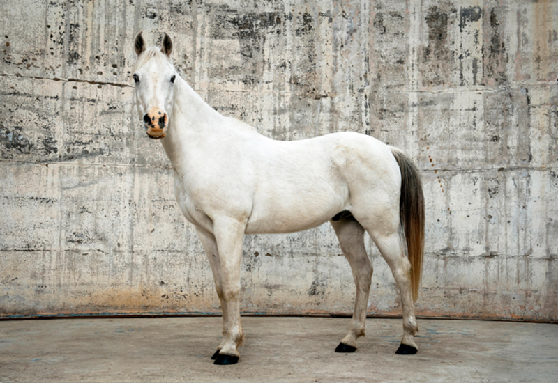 (CreativeWork) PEPE HORSE SERIES Ed. 3 of 10 by GRACE COSTA. Photograph. Shop online at Bluethumb.