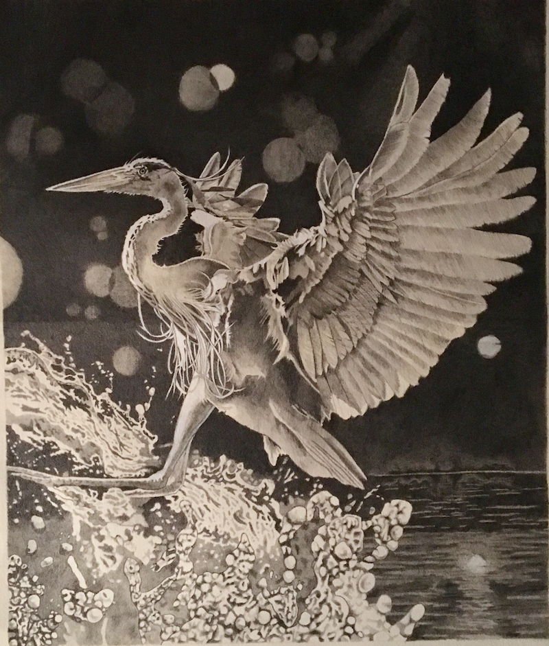 (CreativeWork) Water Landing by sara bell. Drawings. Shop online at Bluethumb.