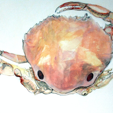 (CreativeWork) Basking crab by Tim O'Shea. Mixed Media. Shop online at Bluethumb.