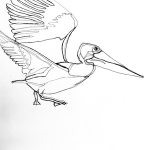 (CreativeWork) Pelican takes flight  by Phil Herbison. drawing. Shop online at Bluethumb.