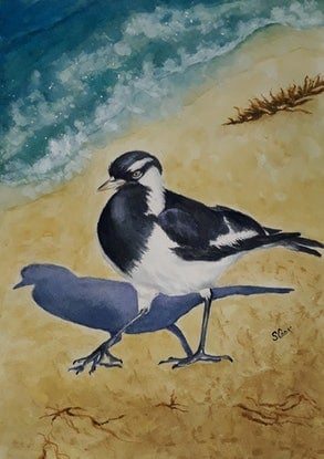 (CreativeWork) Baby  magpie-lark by Svetlana Cook. Watercolour Paint. Shop online at Bluethumb.