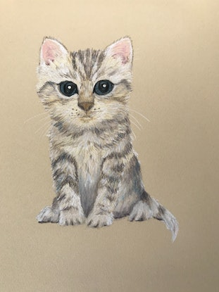 (CreativeWork) Cute Kitty by Kathryn Price. Drawings. Shop online at Bluethumb.