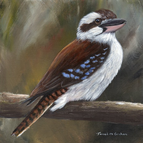 (CreativeWork) Laughing Kookaburra by Janet Graham. Acrylic Paint. Shop online at Bluethumb.