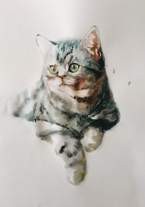 (CreativeWork) Cat by Duillia Xu. Watercolour Paint. Shop online at Bluethumb.