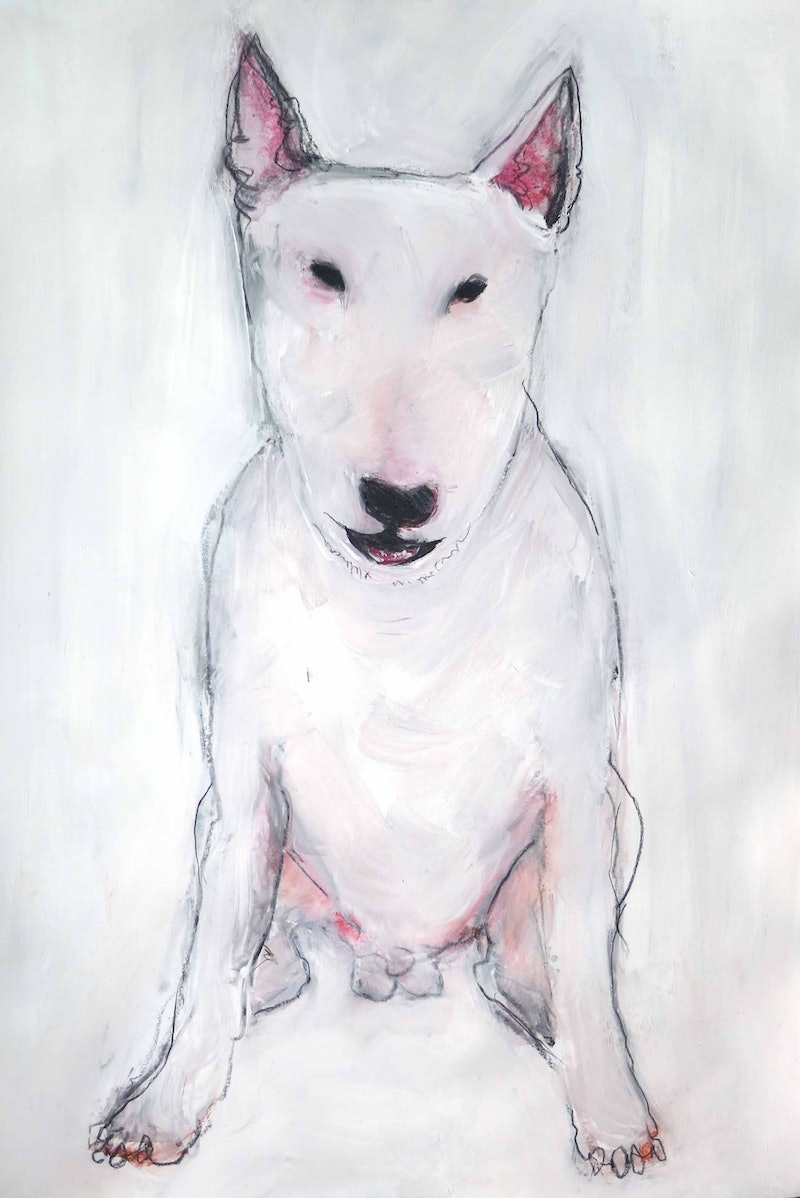 Bull Terrier - Dog with balls