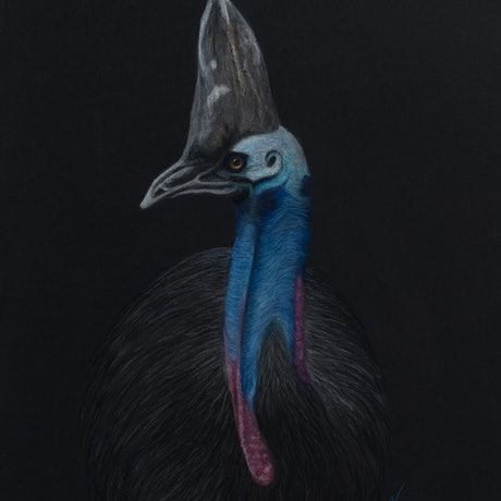"(CreativeWork) ""Horatio"" the Southern Cassowary by Nyree Mason. Drawings. Shop online at Bluethumb."