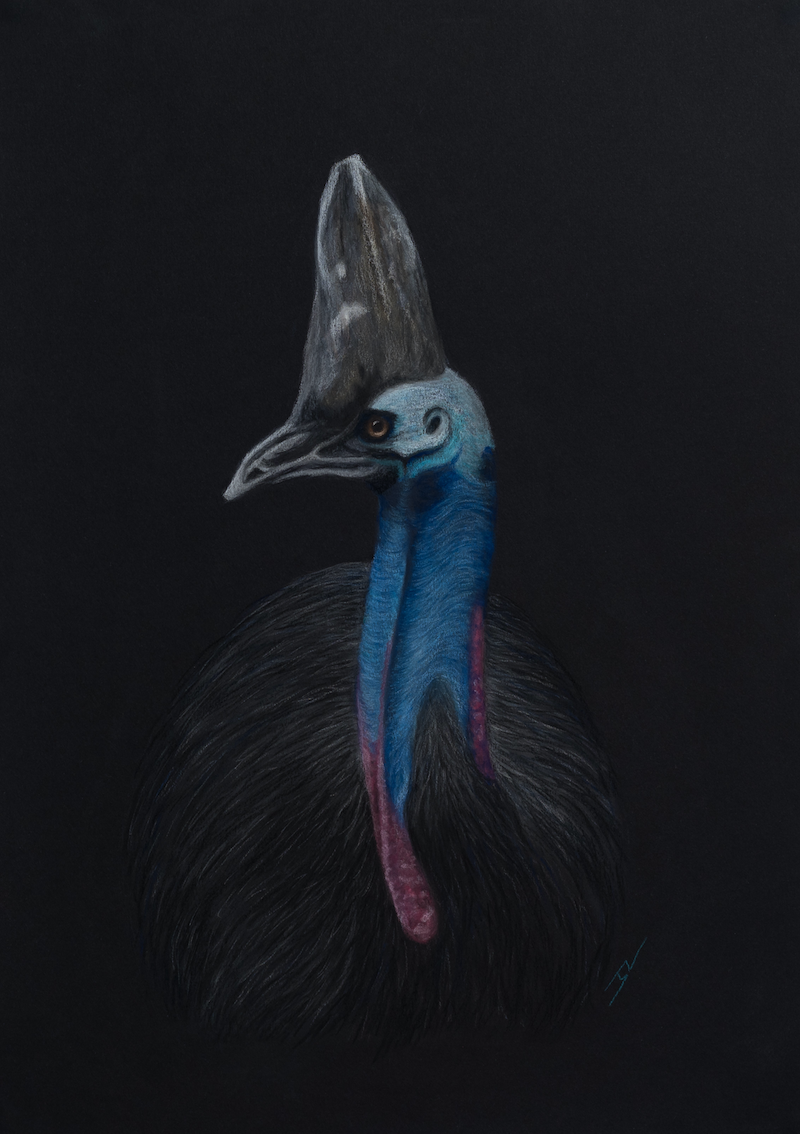 """(CreativeWork) """"Horatio"""" the Southern Cassowary by Nyree Mason. Drawings. Shop online at Bluethumb."""