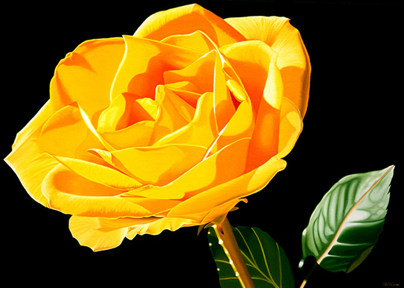 (CreativeWork) Yellow Rose by Mark Kingston. Oil Paint. Shop online at Bluethumb.