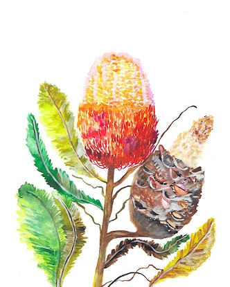 (CreativeWork) Banksia In Bloom by Kirsty Godwin. Watercolour Paint. Shop online at Bluethumb.