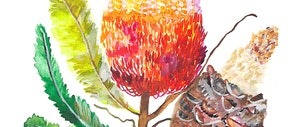 (CreativeWork) Banksia In Bloom by Kirsty Godwin. watercolour. Shop online at Bluethumb.