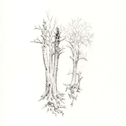 (CreativeWork) Ghost Trees by Lewis Smart. Watercolour Paint. Shop online at Bluethumb.