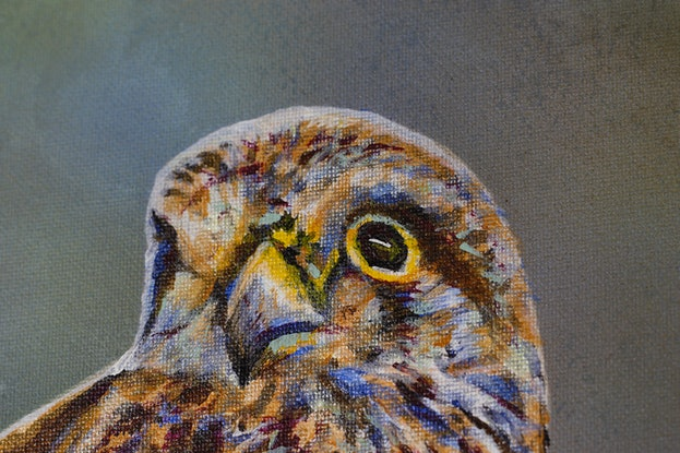 (CreativeWork) Nankeen Kestrel: Last supper before the storm by Susan Willemse. Acrylic Paint. Shop online at Bluethumb.