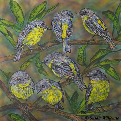 (CreativeWork) Yellow Robins and banksia by Susan Willemse. acrylic-painting. Shop online at Bluethumb.