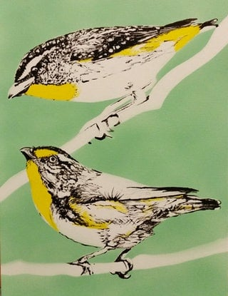 (CreativeWork) Pardalotes by Susan Willemse. Acrylic Paint. Shop online at Bluethumb.
